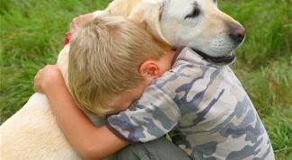 Как животные помогают людям