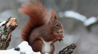Как животные готовятся к зиме