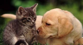 Как животные воспринимают мир