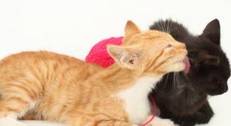 Как животные помогают друг другу