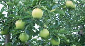 Как бороться с вредителями яблонь
