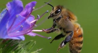 Как видят пчелы