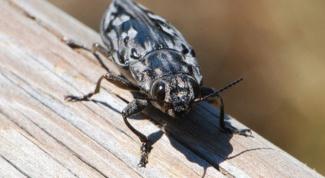 Как вывести жуков