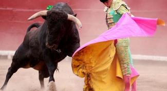 Как видят быки