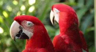 Как видят птицы