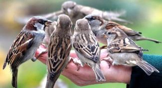 How to deal with sparrows