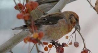 Как живут птицы зимой