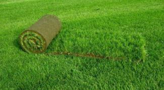 Благоустройство и озеленение территории - как складываются расценки