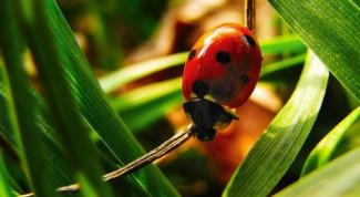 Что и как едят насекомые