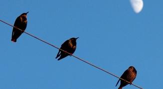 Почему не бьёт током птиц, которые сидят на высоковольтных проводах
