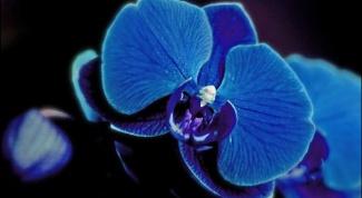 Как пересаживать комнатную орхидею