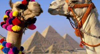 Куда поехать в Египет с ребенком