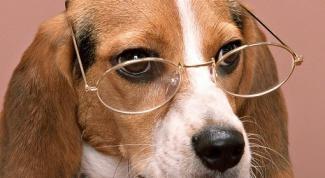 Как воспитать умную собаку