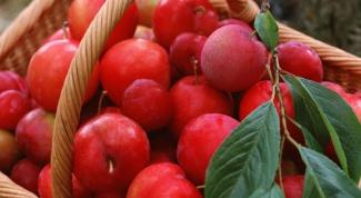 Как приготовить компот из слив