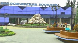 Куда пойти с ребенком в Новосибирске