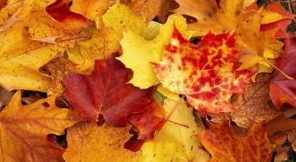 Как сохранить осенние листья