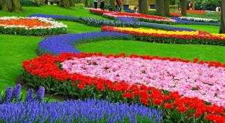 Как посадить красиво цветы