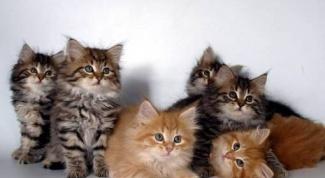 Куда отдать котенка