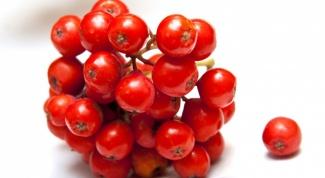 Целебная сила осенних ягод