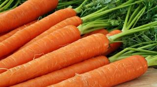 Что приготовить из обычной моркови