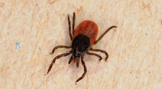 Where to treat a tick bite