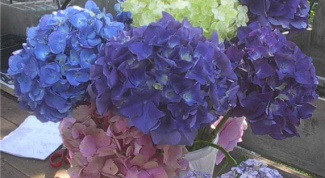 How to combine hydrangeas in the bouquet