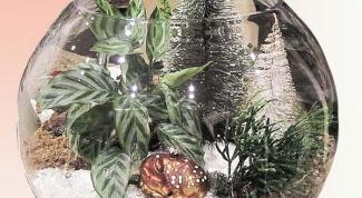 создать новогоднюю подарочную композицию из комнатных растений