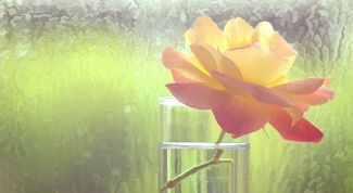 Как сохранить свежесть роз дольше