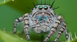 К чему снятся пауки?