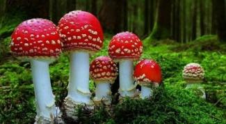 К чему снятся грибы?