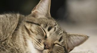 Что снится кошке?