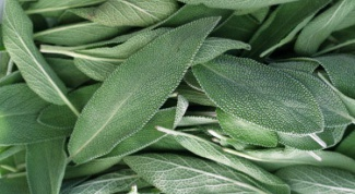 How to prepare sage