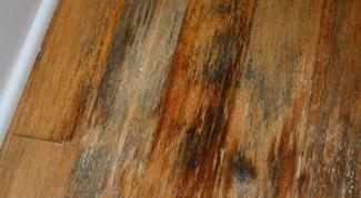 Как вывести грибок под полом в деревянном доме?