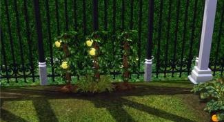 Где в sims 3 найти плод жизни
