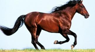 Новый 2014 год лошади: встречаем по всем правилам
