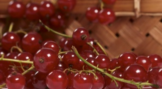 How to cook a delicious jelly of red currants