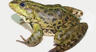 Лягушка: среда обитания