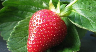 How to grow a lot of strawberries in the country