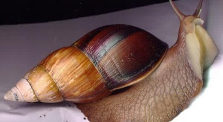 How to keep the house snail