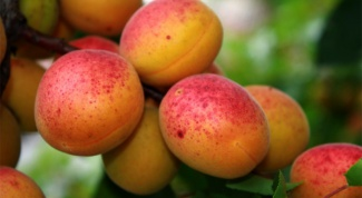 Recipes of jam of apricots