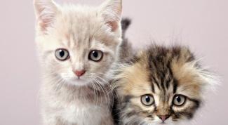 Как привить котенку хорошие манеры