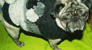 Как быстро связать свитер для собаки