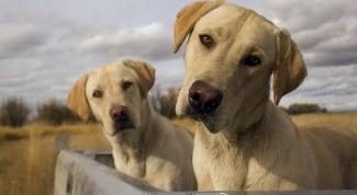 6 фильмов про собак