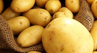 Ранняя картошка: секреты выращивания