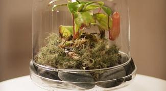 Как вырастить мини-сад в бутылке