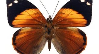 Бабочки в интерьере. Как украсить бабочками стену и квартиру в целом.
