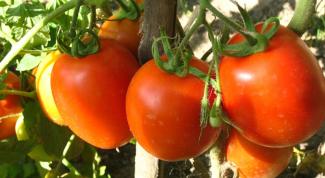 Как сделать, чтобы помидоры покраснели