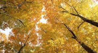 9 правил хорошего настроения этой осенью
