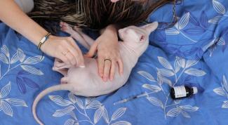 Как сделать укол кошке?