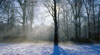 Какие есть зимние приметы